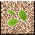 beech-pellet-beveled